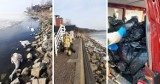 Powiat pucki: to nie ptasia grypa? Nasza Ziemia z Kosakowa ma wątpliwości. Zdaniem ekologów łabędzie na zatoce mogły być otrute | ZDJĘCIA