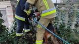 Konin: Utknął w ogrodzeniu, pomogli mu strażacy
