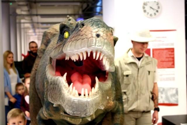 """Światowy Dzień Dinozaura przypada 26 lutego. Kilka dni wcześniej Centrum Przyrodnicze w Zielonej Górze postanowiło zaprosić mieszkańców, aby przybliżyć im prehistoryczne gady, które zawsze wzbudzają ogromne zaciekawienie nie tylko najmłodszych.  Rok temu do centrum przybyły tłumy. W tym roku organizatorzy zaplanowali  dwa dni (23-24 lutego) przepełnione atrakcjami i nauką dla całych rodzin. Bilety rozeszły się jak świeże bułeczki. Główną atrakcją wydarzenia była specjalnie przygotowana animacja na dużym ekranie – pokaz w technologii AR (rozszerzonej rzeczywistości). A hitem okazał się animatroniczny dinozaur spacerujący po Centrum.  To oczywiście nie wszystko. Uczestnicy mogli wirtualnie odkopać szkielety różnych dinozaurów, zobaczyć, jak  przedstawiciele poszczególnych gatunków wyglądali i pobawić się z tymi wirtualnymi zwierzętami. Można było również wcielić się w paleontologa.  Na sali ekspozycyjnej znajduje się piaskownica z ukrytymi szczątkami dinozaura. Uczestnicy zabawy za pomocą pędzelków i łopatek mieli za zadanie odkopać te artefakty. Nie zabrakło także stanowisk warsztatowych i specjalnie przygotowanego koło fortuny """"Dino"""" z nagrodami. Codziennie zaplanowano cztery tury zwiedzania. Zobaczcie, jak było podczas jednej z nich w niedzielę.   Czytaj też: Seria niezwykłych zjawisk na lubuskim niebie [ZDJĘCIA]  POLECAMY RÓWNIEŻ WIDEO:  Zielona Góra. """"Straszyki - mistrzowie kamuflażu"""" warsztaty w Centrum Przyrodniczym dla rodziców i dzieci"""