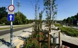 Bydgoszcz. Marnieją drzewa przy Gdańskiej w Myślęcinku. A miała tam być oaza zieleni [zdjęcia]