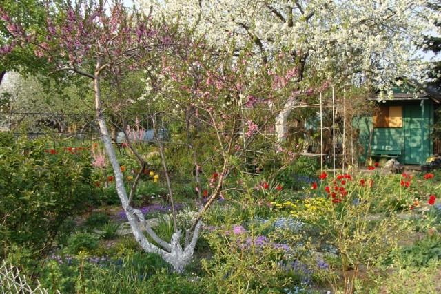Kwiecień to czas wielu prac w ogrodzie. Niestety w tym roku możliwość ich wykonania stoi pod znakiem zapytania.