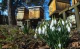 Idzie prawdziwa wiosna! W weekend w regionie nawet 18 stopni!