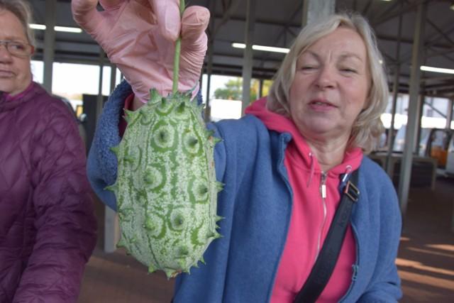 Oto kiwano, czyli ogórek kolczasty, który rośnie i w Polsce i można go kupić na szczecineckim targowisku