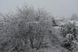 Prawdziwa zima powróciła! W Zamościu od kilku godzin sypie gęsty śnieg. Zobaczcie jak wygląda miasto o poranku [ZDJĘCIA]