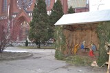 Zawiercie: Strażnicy miejscy ugasili śniegiem płonącą szopkę przed bazyliką mniejszą