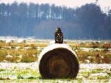 Zima w obiektywie Karoliny Szulc. Stepnickie lasy i pola pod śniegiem