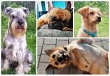 Nowy Sącz. Pupile naszych czytelników. To prawdziwe psie piękności. Musicie je zobaczyć [ZDJĘCIA]