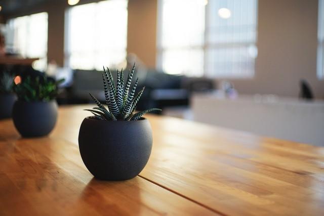 W galerii znajdziecie rośliny, które mogą przyciągać do nas szczęście. Zobaczcie, które rośliny warto trzymać w naszych domach.Zobaczcie szczegóły na kolejnych zdjęciach >>>>
