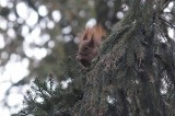 Inowrocław. Na świąteczny spacer do inowrocławskich solanek zapraszają wiewiórki, sikorki i inne sympatyczne zwierzaki. Zdjęcia