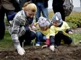 Fundacja Pomóż im sadzi pola nadziei z żonkilami dla chorych dzieci