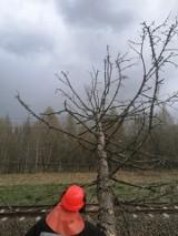 Po wichurze. Wyjazdy strażaków do powalonych drzew, zerwanych linii energetycznych (ZDJĘCIA)