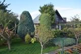 Gdynia: Powróciła moda na rodzinne ogrody działkowe. Są ulubionym miejscem spędzania wolnego czasu dla tysięcy mieszkańców