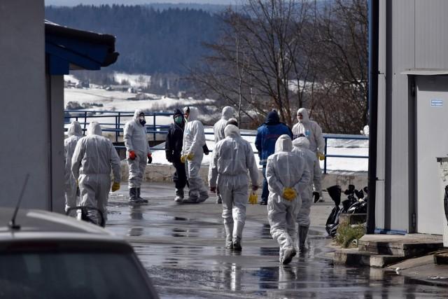 Na Podkarpaciu wykryto od początku roku już trzy ogniska wysoce zjadliwej ptasiej grypy. W każdym przypadku konieczna była utylizacja drobiu.(na zdjęciu działania inspekcji weterynaryjnej w Bielance)