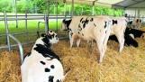 Nadzwyczajne wsparcie w sektorze mleka i świń