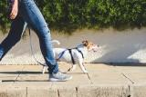 Mandat za spacer z psem będzie wyższy. Ile wyniesie i za co można go dostać?
