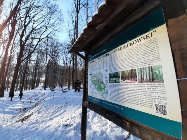 Wycinka starych buków w Lasach Murckowskich w Katowicach została tymczasowo wstrzymana. Nadleśnictwo obiecuje podjęcie rozmów w sprawie
