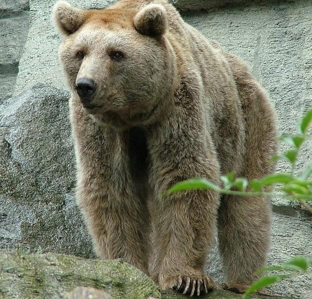 Ostatni niedźwiedź w tej okolicy został zabity w 1893 roku.