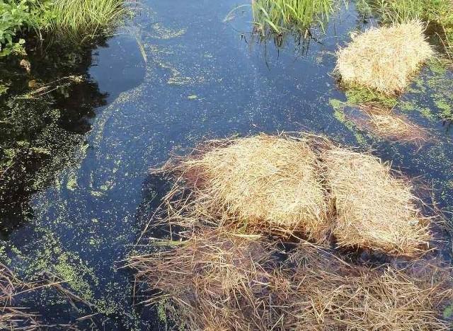 Woda w Czernicy została zanieczyszczona. Przed wpłynięciem ścieków Jezioro Sławskie chroniły słomiane zapory zbudowane przez strażaków i strażników.
