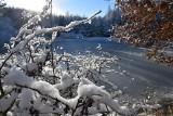 Nareszcie sypnęło trochę śniegiem. Leśny zimowy spacer (ZDJĘCIA)