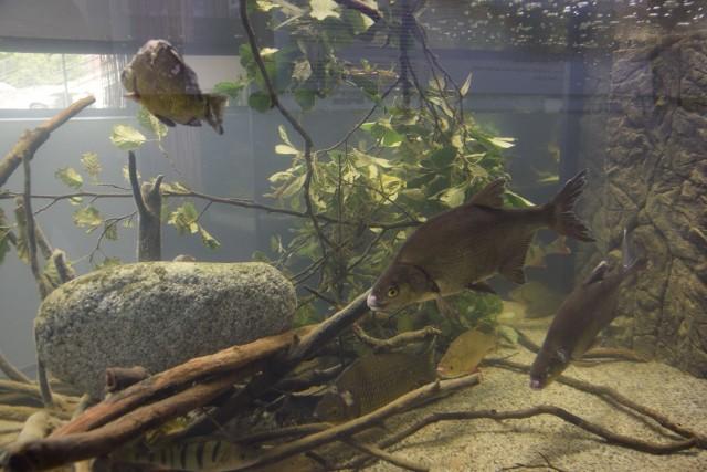 Ryby w akwariach