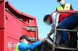 Urząd Miejski w Otyniu poinformował o wynikach badań odpadów, które wiozła jedna z ciężarówek na dawne wysypisko w Bobrownikach