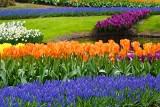 Liście zamiast kwiatów. Sprawdź, dlaczego rośliny cebulowe nie kwitną