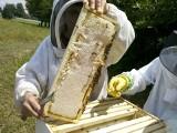 Na sprzęt, szkolenia, analizy miodu. Wsparcie rynku produktów pszczelich