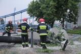 Deszcz i wiatr we Wrocławiu. Tynk odpada z budynków, drzewo runęło na fontannę [ZDJĘCIA]