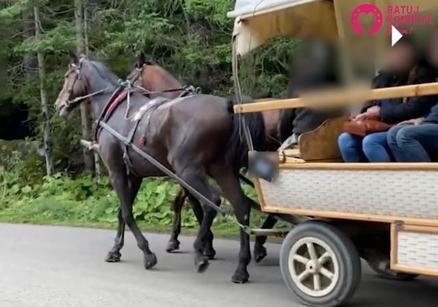 Kulejący koń został nagrany przez turystkę. Teraz szuka go TPN.