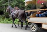 Tatry. Poszukiwania kulawego konia z Morskiego Oka. Animalsi dostali film od turystki. TPN sprawdza zgłoszenie