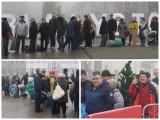 Darmowe choinki w Białymstoku. Mieszkańcy wymienili sztuczne za żywe. Duża kolejka po bezpłatne drzewka (zdjęcia)