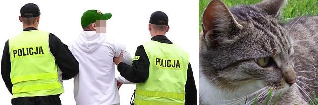 Policja zatrzymała 16-latka, który znęcał się nad kotami.