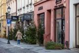 Atak wandala w Bydgoszczy. Chodził i niszczył świąteczne ozdoby [zdjęcia]