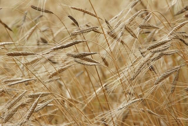 We wrześniu w Starym Kurowie, Dobiegniewie i Zwierzyniu odbędą się spotkania dotyczące fundyszy unijnych w ramach Programu Rozwoju Obszarów Wiejskich 2014 -2020.