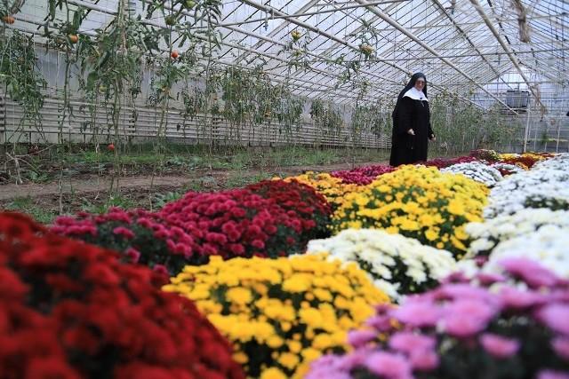 Siostry benedyktynki ze Staniątek sprzedają chryzantemy, które zdobią groby zmarłych. W zamian za wsparcie klasztoru obiecują modlitwę
