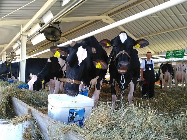 W przypadku dobrostanu krów mlecznych, gdy zapewnimy im wypas, możemy liczyć na 185 zł dopłaty do sztuki rocznie. Płatność będzie przyznawana rolnikowi, który będzie wypasał krowy mleczne przez minimum 120 dni w okresie wegetacyjnym.