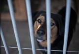 Przytulisko dla zwierząt prosi o jeden procent