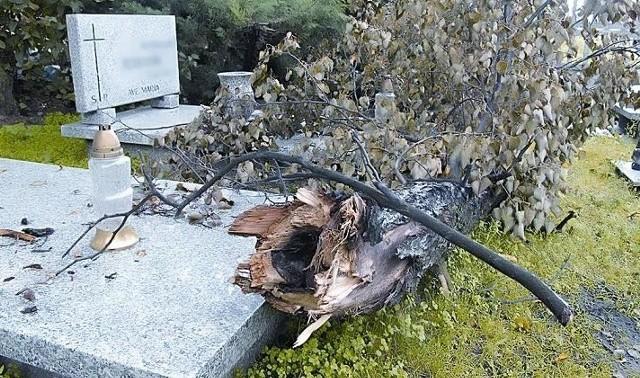 - To drzewo leży na grobach około tygodnia i nikt z tym nic nie zrobił – skarży się Stefania Ziemakiewicz.