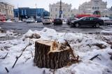 Budowa dworca zamyka ul. Gazową. Czy da się jeszcze uratować drzewa przed wycinką?