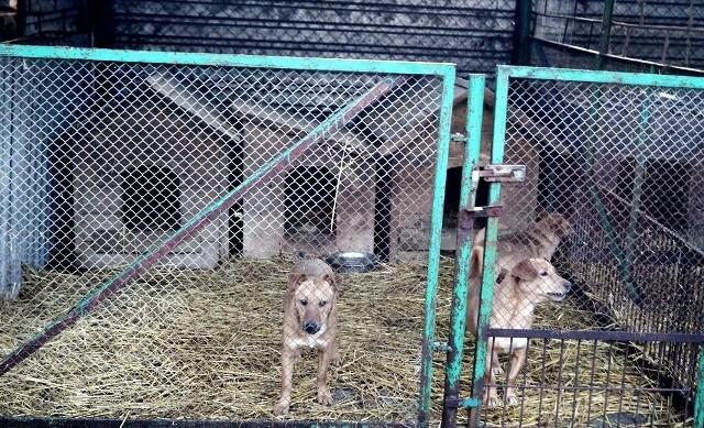 Znacznie poprawią się warunki podopiecznych zwierzaków.
