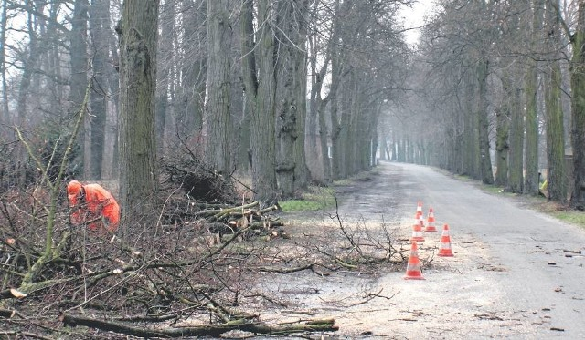 Ogławianie drzew w Studzieńcu dobiegło końca. Wycinkę dokończy wykonawca inwestycji, którego poznamy w przeciągu kilku tygodni.