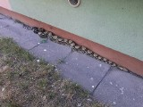 Wąż boa dusiciel pod blokiem w Łodzi. Na Teofilowie uciekł wąż dusiciel. Animal Patrol szukał właściciela 5.07.2019