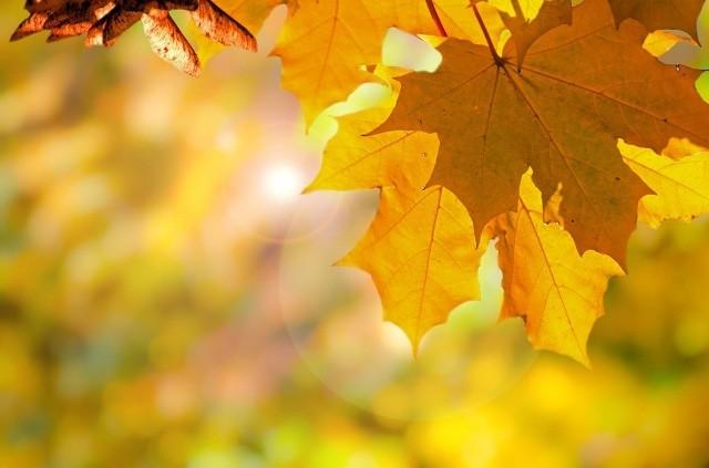 Czy ostatni weekend październikowy będzie jeszcze ciepły czy też ochłodzi się już listopadowo? Warto sprawdzić, bo przed nami porządki na cmentarzach i rodzinne spacery. Czytaj dalej ------>