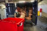 Bydgoscy policjanci spalili ponad 280 kg narkotyków. Z dymem poszły marihuana, amfetamina, dopalacze [zdjęcia]