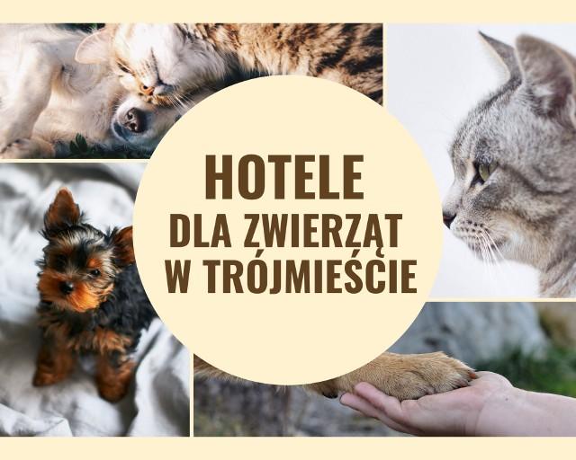 Hotele dla zwierząt w Gdańsku, Gdyni i w Sopocie. Gdzie możemy zostawić naszego pupila na kilka dni? Sprawdź!