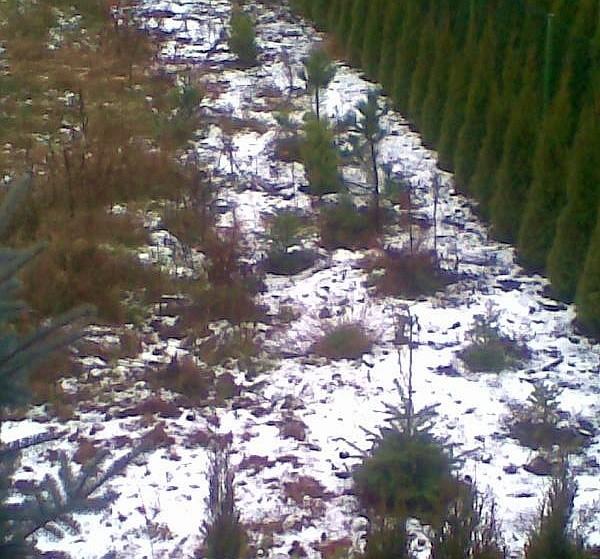 O!O!O! Pierwszy śnieg ! Widok z okna Dorota R