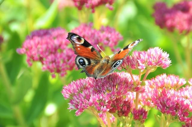Wiele roślin jest przystosowanych do suchych warunków i w ogrodzie nie trzeba ich podlewać. Zobacz, co posadzić.