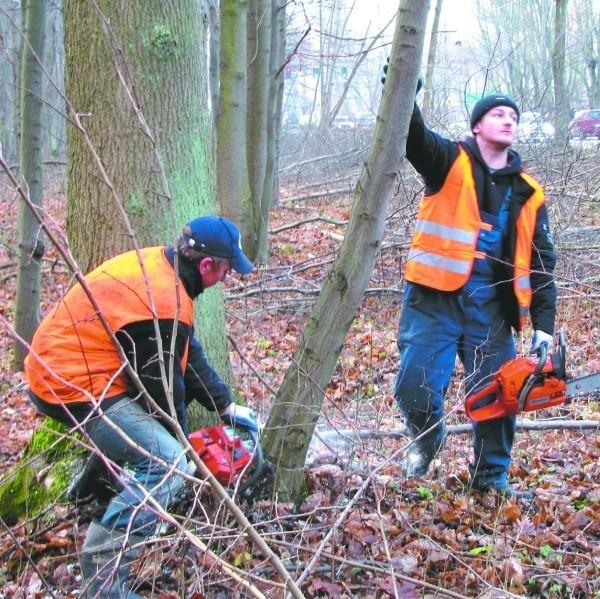 Z powodu robót zniknie 980 drzew. Ale w zamian posadzonych tu zostanie ponad 4,6 tysiąca roślin.