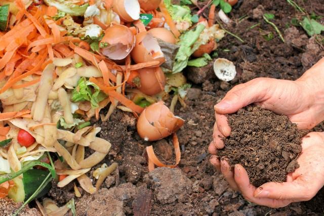 Kompostownik zmniejsza też ilość odpadów trafiających na wysypisko, ale też daje darmowy, ekologiczny nawóz dla ogrodu