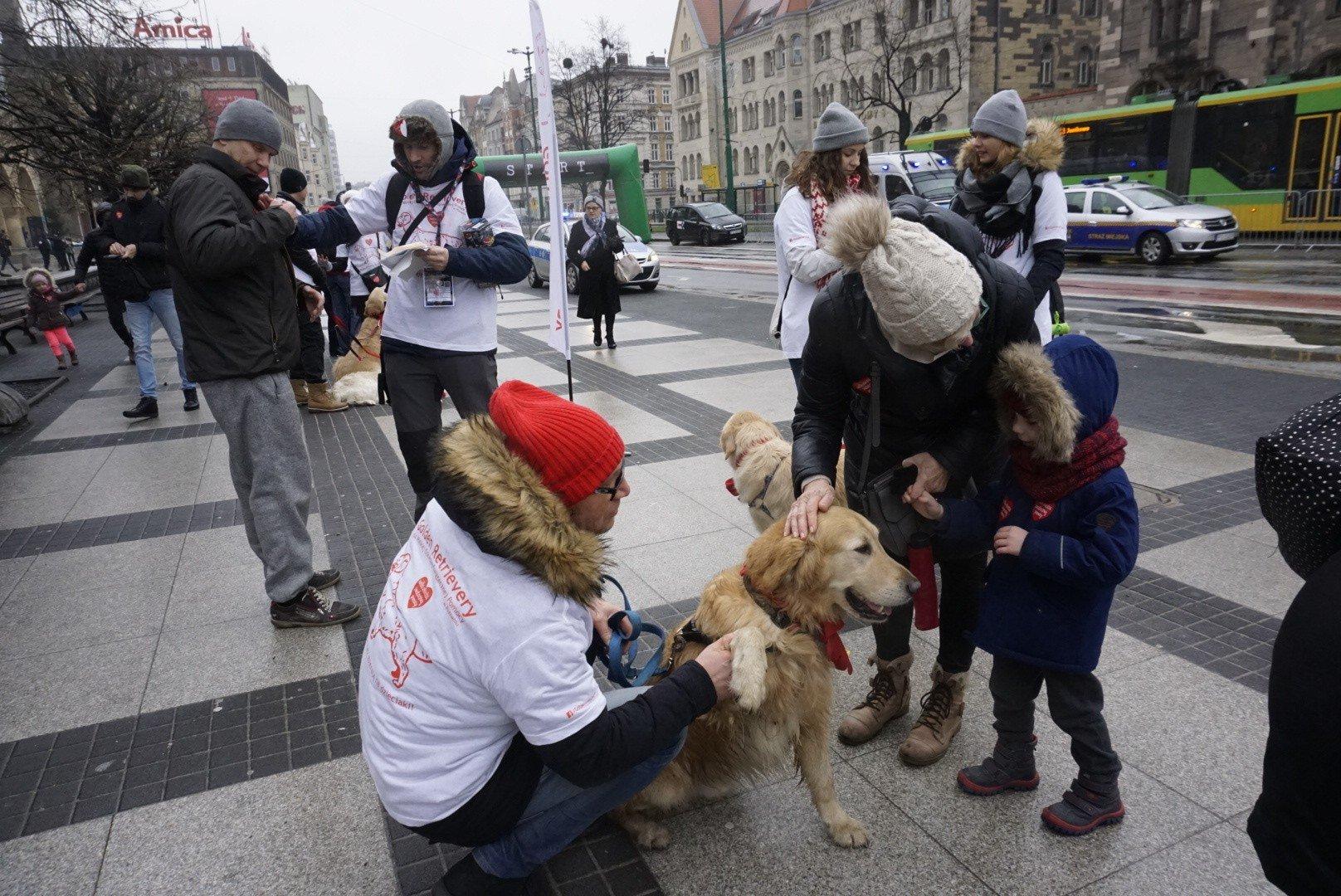 Bardzo dobra Finał WOŚP w Poznaniu 2019: Psy też zbierają! Golden retrievery CH01